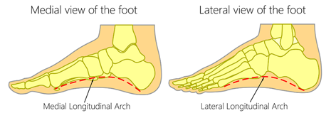 foot arch structure